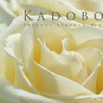 Kadobon Fortuna White Rose Open 10802